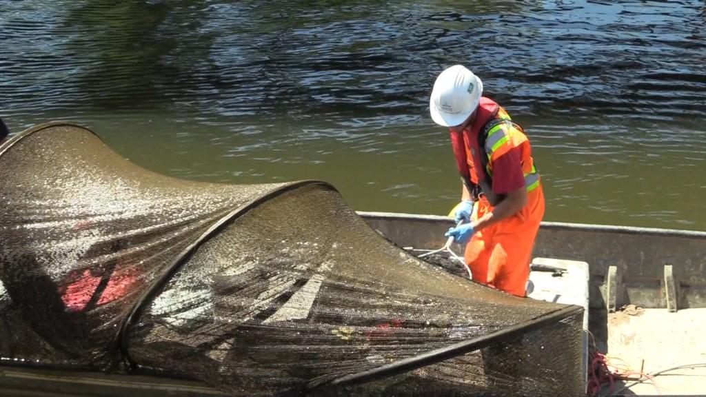 Controle passe a poissons - Nouveau pont Champlain